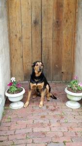 Baxter in Archway