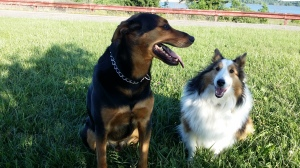 Dgos-Baxter and Shelby
