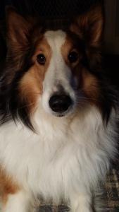 Dog-Shelby