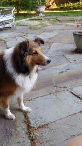 Foster Dog-Kammie