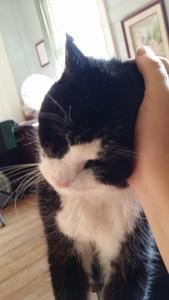 Cat-Harley