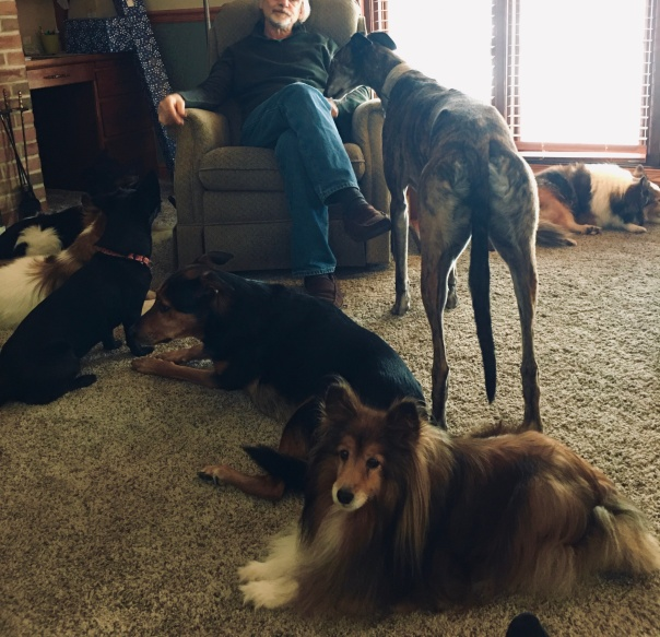 Dogs at Family Christmas