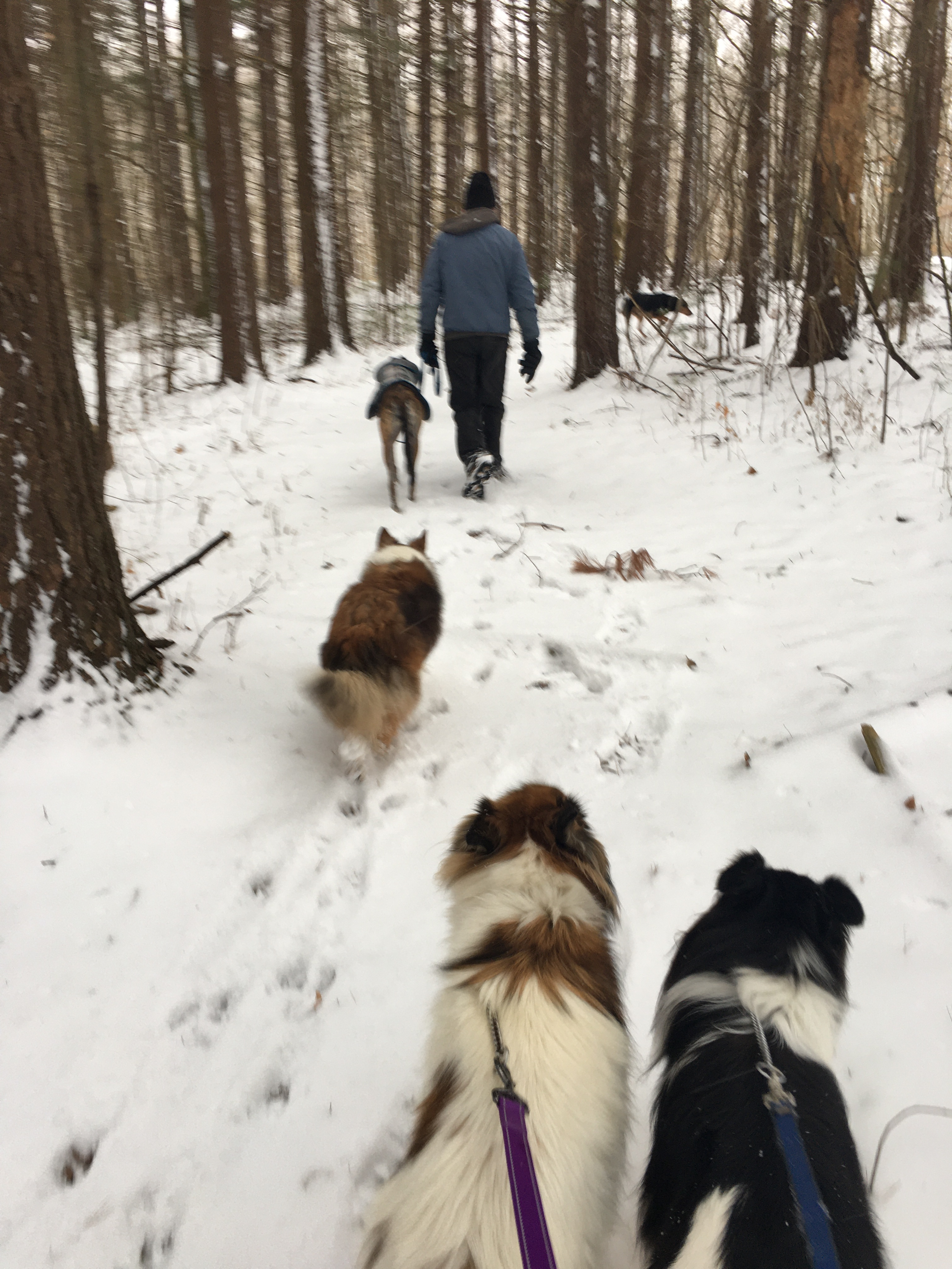 Snowy hike with dogs at West Branch State Park, Ohio
