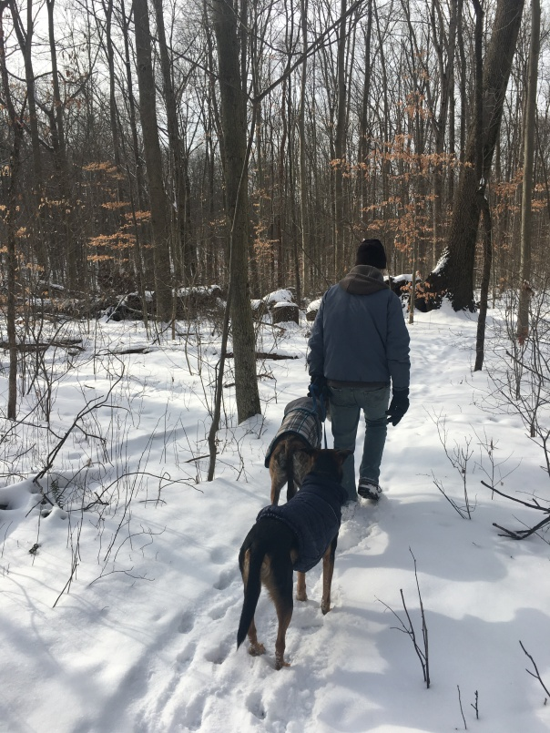 Dogs hiking, West Branch State Park, Ohio