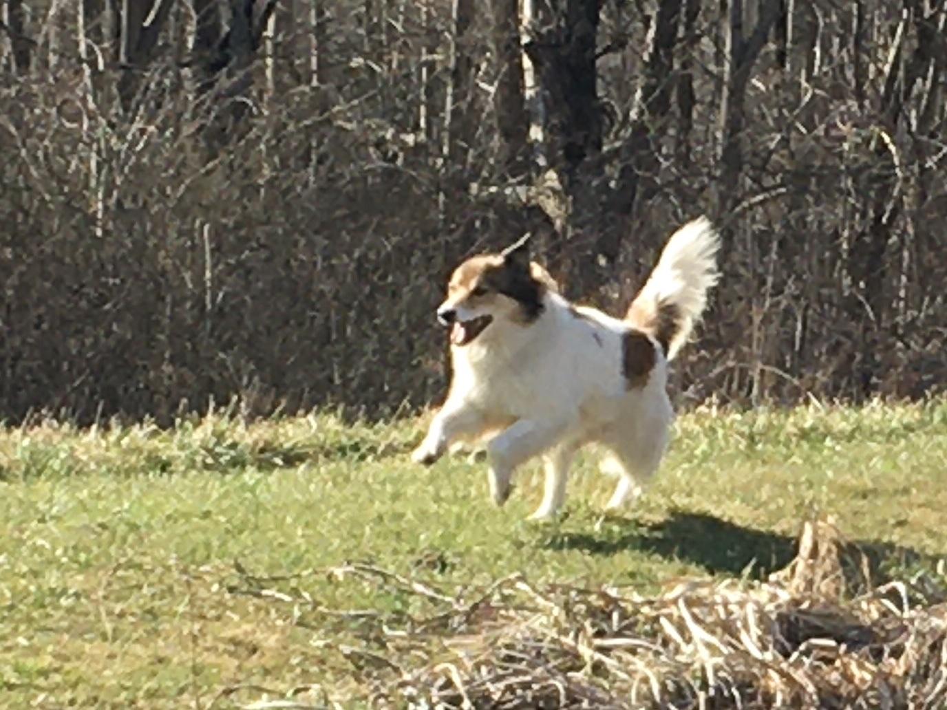 Dog returning